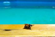Chasser les guêpes autour de la piscine