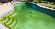 Anti algue et rattrapage de l'eau verte pour piscine