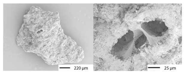 zeolithe agrandissement microscope