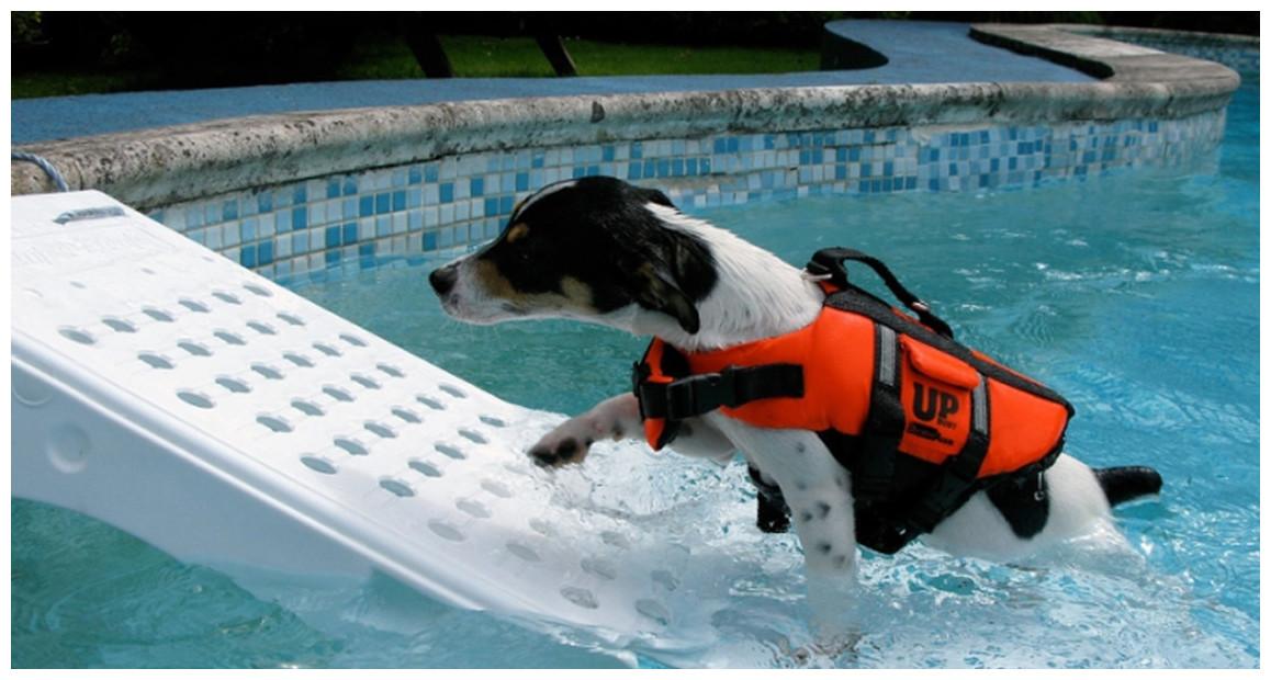 rampe de sécurité pour faciliter la sortie de la piscine des animaux