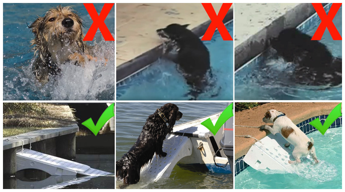 rampe de sortie de piscine pour animaux skamper ramp en situation