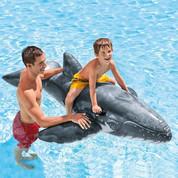 Chevauche baleine