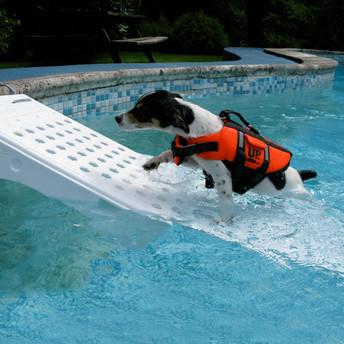 Rampe de sortie pour animaux skamper ramp